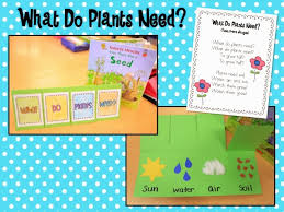 mrs ricca u0027s kindergarten growing a kinder garden plants unit