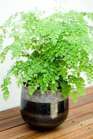 10 common house plants that help clean and filter indoor air