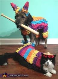 animals halloween here u0027s how these animals are planning on celebrating labor day