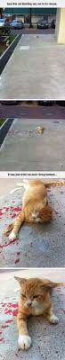 Stupid Cat Meme - stupid cat meme by jack the rapper memedroid
