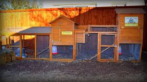 expanding our chicken coop for more hens youtube
