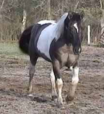 Grulla mares kick but *Please join* (Mares wanted to form a mare herd, please have a grulla horse, no stallions a lowed till later on in another herd topic.) Images?q=tbn:ANd9GcS4nrv-ryx460dbVepRn-YGHpJgqbxZYt20bwr5JCxB3o5eoCLgzQ