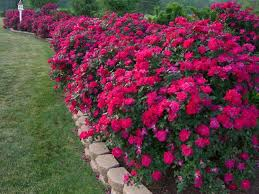 Flower Bed Border Ideas Amazing Flower Bed Border Ideas Flower Bed Border Ideas