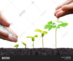 agriculture hand of a farmer nurturing young baby plants growing