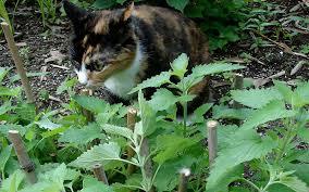 mosquito repellent plants you can grow in your atlanta garden
