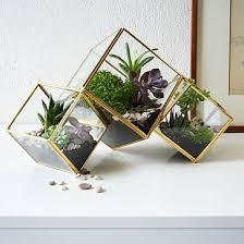 cube terrarium medium gold terraria plants and apartments
