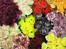 flowers wholesale wholesale flower market inc