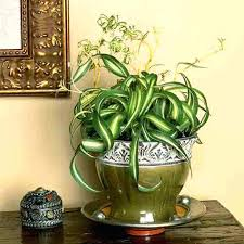 plants low light 10 easy care houseplants for low light low light indoor plants lets