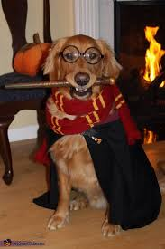 Pet Cat Halloween Costumes Best 25 Funny Dog Halloween Costumes Ideas On Pinterest