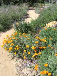 the wild garden a california native habitat dirtgarden