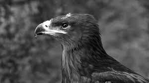 ornithological park france le rocher des aigles bird show