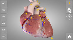 Anatomy Videos Free Download Heart 3d Anatomy Lite Android Apps On Google Play