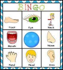 body parts picture word cards prekinders bodies kindergarten
