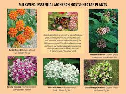 tennessee native plants the ultimate relay race the monarch butterfly story what is
