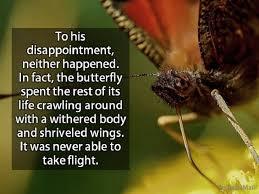 an inspiring butterfly spirituality babamail