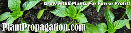 propagation techniques by plant variety how to propagate plants