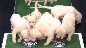 watch jimmy fallon u0027s puppies make adorable super bowl lii