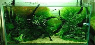 driftwood aquarium fish tank tree trunk plant wood
