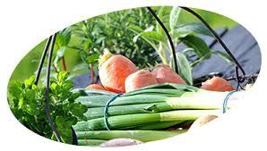livraison de fruits au bureau livraison de paniers de fruits et de légumes dans les hauts de seine
