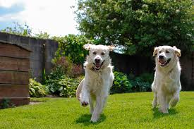 Can You Bury A Dog In Your Backyard Landscaping For Dogs Houselogic Dog Friendly Landscaping