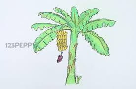drawn banana banana tree pencil and in color drawn banana banana