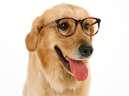 Wallpaper Dog Dog Wearing Glasses Wallpaper 10787 1600x1200 Px Hdwallsource Com