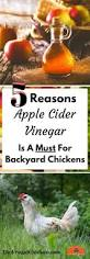 Backyard Chicken Blogs by 632 Best Backyard Chickens U0026 Ducks Images On Pinterest Raising