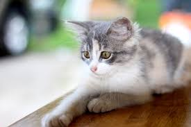 is keeping house cats cruel pros cons the cat guide house kitty
