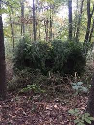 Natural Hunting Blinds Proper Ground Blind Placement Hunting Pinterest Ground Blinds