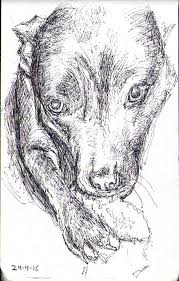 sketch of a dog named lily in ballpoint pen one drawing daily