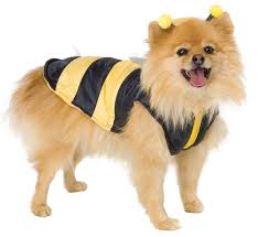 Small Dog Halloween Costumes Ideas 45 Halloween Costumes Pets Images Pet