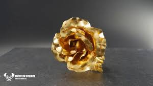 roseternity the 24 carat gold rose for lovers youtube