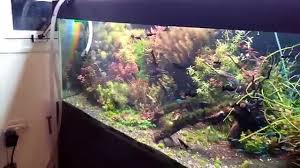 my new aquarium design 14 02 2015 youtube