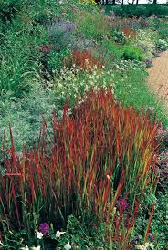 decorative grasses for landscaping garden landscaping with