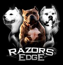 american pitbull terrier game bred bloodlines history of the razors edge bloodline