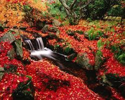 imagenes de otoño para fondo de escritorio descargar la imagen en teléfono plantas paisaje ríos otoño