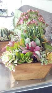 189 best cactus succulent container gardens images on pinterest