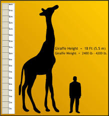 peoria zoo weights and measurements peoria zoo