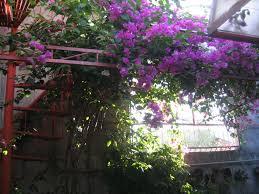 beautiful garden decoration using outdoor red metal spiral