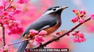 bird wallpaper bird wallpapers photos and desktop backgrounds up to 8k 7680x4320