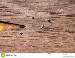 Powder Post Beetles In Hardwood Floors - wood boring beetle damage stock photo image 48791861