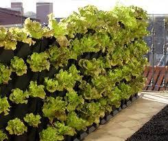gem se pflanzen balkon balkon tipps zum ernten auf dem eigenen balkon living at home