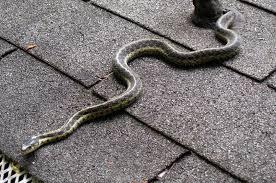 Found A Snake In My Backyard Snake In My Backyard Home Decorating Interior Design Bath