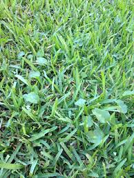 winter lawn and garden tips