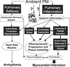 air pollution and cardiovascular disease circulation