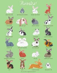 17 best images about rabbit on pinterest character illustration