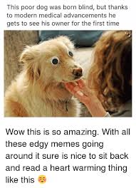 Wow Dog Meme - this poor dog was born blind but thanks to modern medical