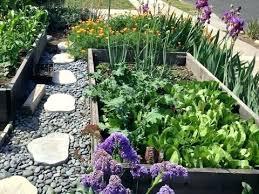 shade vegetable garden full image for shade loving vegetable