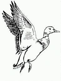 duck flying black and white