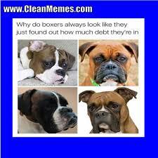 Much Dog Meme - much debt clean memes